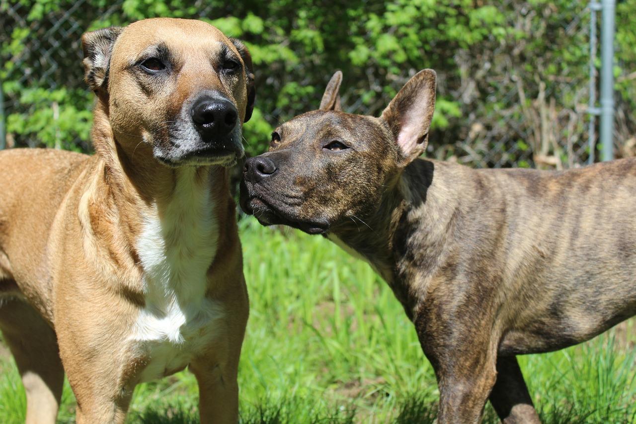 Opieka nad bezdomnymi zwierzętami w Gminie Lubin