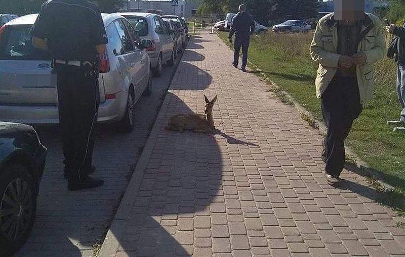 (Nie) pierwsza ofiara płotu w Parku Leśnym