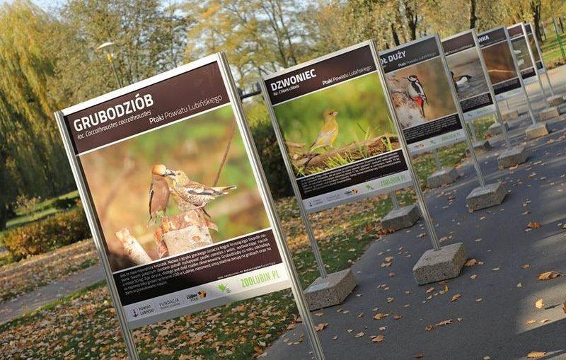 Ptaki Powiatu Lubińskiego – nowa wystawa w plenerze